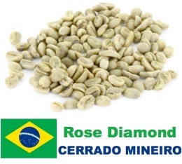 Café vert Rose Diamond (Special Blend) - Région Cerrado - Brésil - 1kg