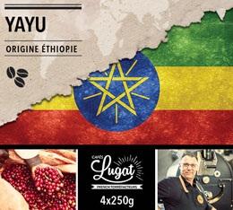 Café en grains : Ethiopie - Moka Yayu - 1Kg - Cafés Lugat