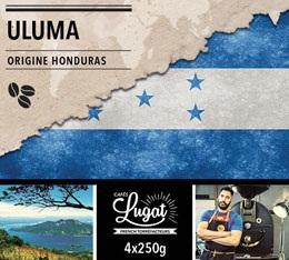 Café en grains Bio : Honduras - Uluma - 1Kg - Cafés Lugat