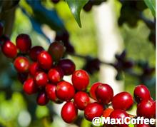 cafe-arabica-origine