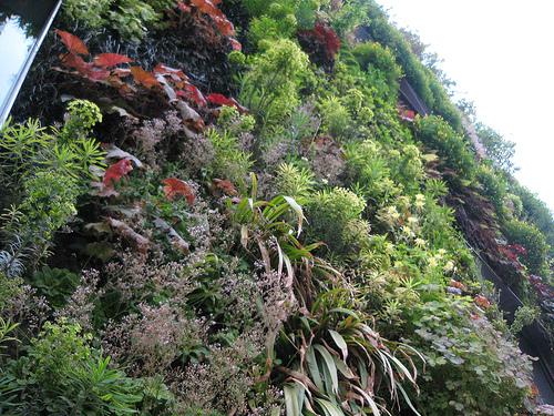 mur_vegetal_quai_branly_blog_immobilier