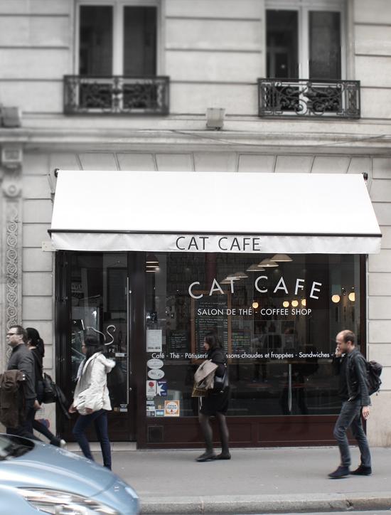 cat-cafe-paris-coffeeshop-1