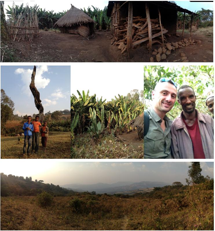 decouverte-plantation-cafe-gidaamii-ethiopie