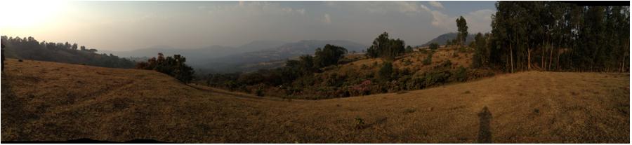 foret-cafeiere-wallaga-ethiopie