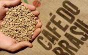 cafe-bresil-arabica
