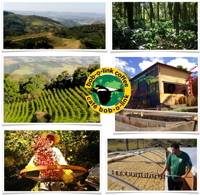 plantation Fazenda Ambiental Fortaleza