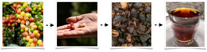 transformation-cerise-de-cafe-cascara