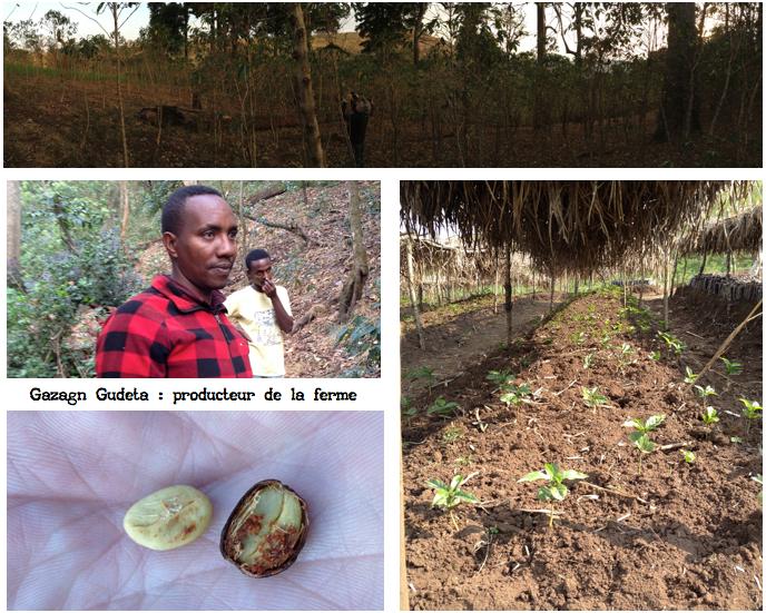 production-cafe-ethiopie-moka-waabaa