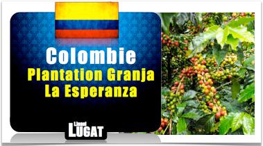 cafe-granja-la-esperanza-colombie