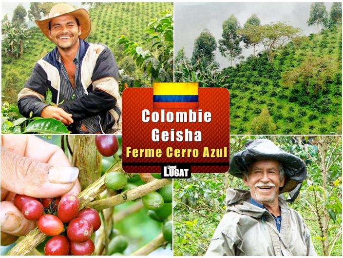 coffee-geisha-ferme-colombienne-cerro-azul-granja-la-esperanza-5