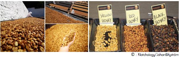 cafe-honey-process