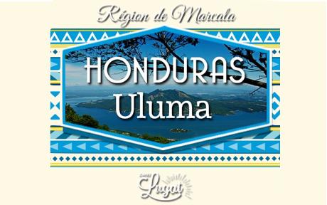cafe-uluma-honduras-8