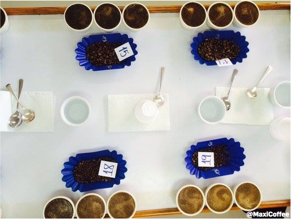 cupping-cafes-lugat