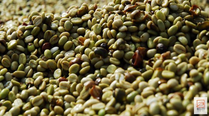 cafe-parana-bresil