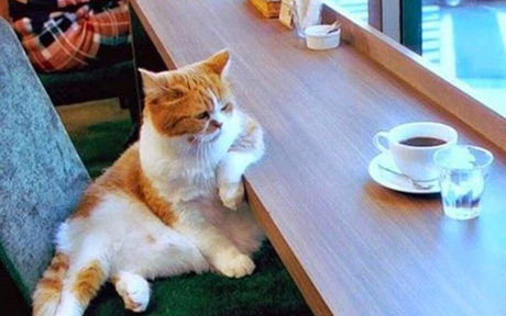 chat-cafe