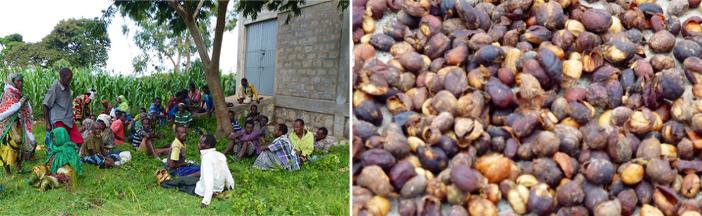 cafe-moka-harrar-ethiopie