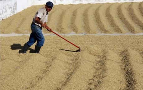 production-cafes-guatemala