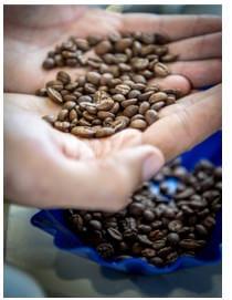 cafes-grains-epices