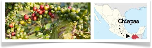 Café en grains Bio Mexique Chiapas