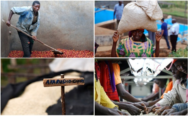 café izuba 100% Bourbon Rouge burundi