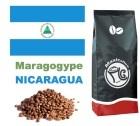 Caf� en grains Nicaragua Maragogype - 1 kg