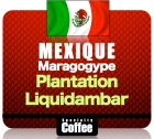 Caf� en grains Maragogype Plantation Liquidambar - Mexique - 1Kg