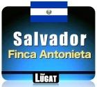 Caf� en grains Maragogype Salvador - Finca Antonieta - 250gr - Lionel Lugat