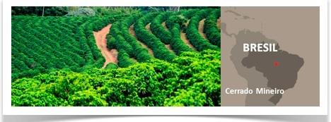 cafés en grains illy monoarabica plateau cerrado mineiro brésil
