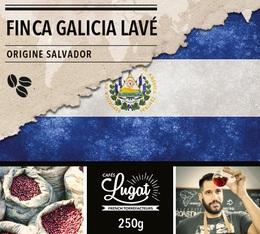 Café en grains : Salvador - Finca Villa Galicia Lavé - 250g - Cafés Lugat