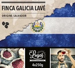 Café en grains : Salvador - Finca Villa Galicia Lavé - 1Kg - Cafés Lugat